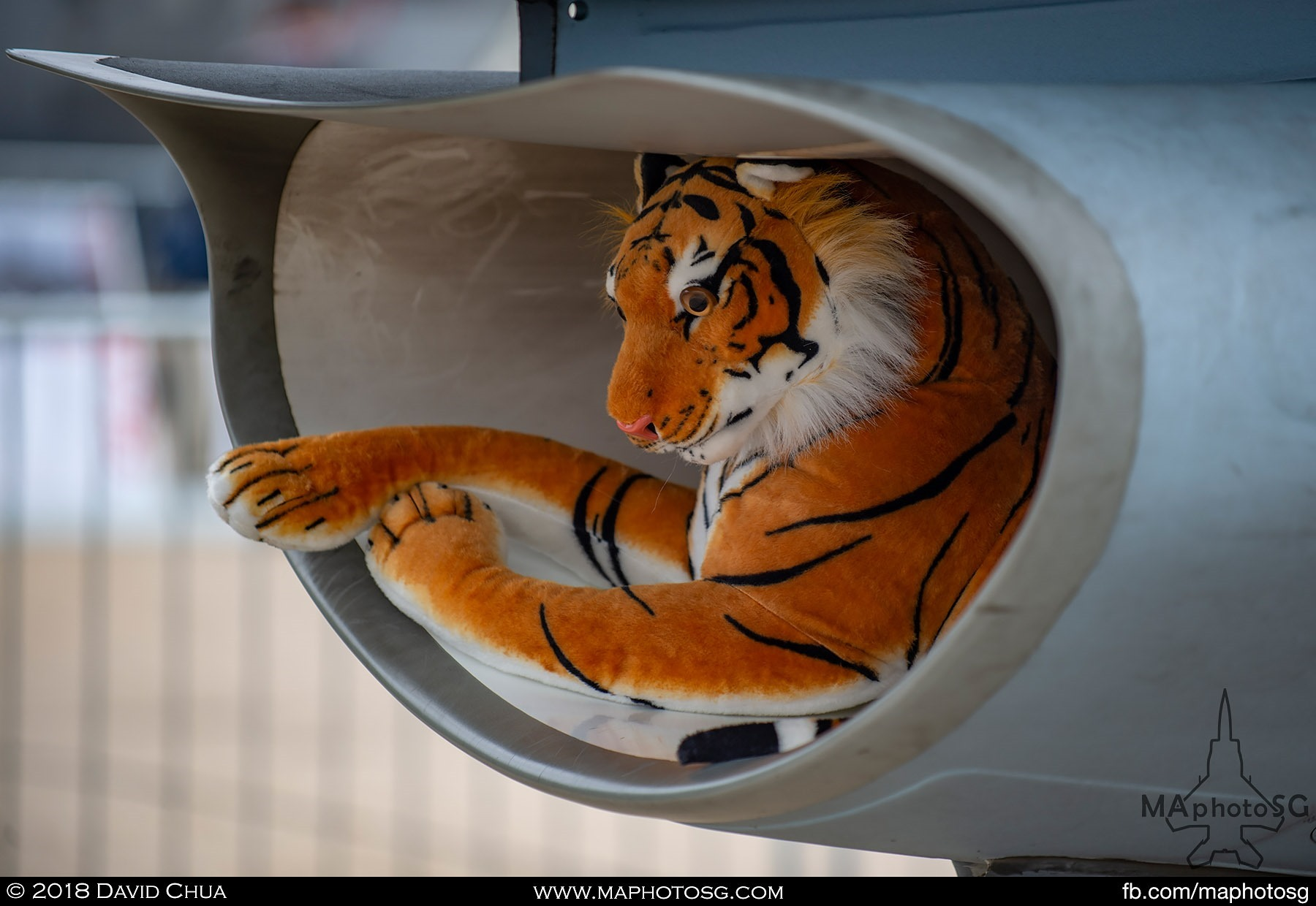 06. Tiger in the air intake of the Polish Air Force F-16